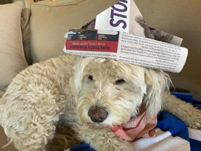 14 - Doggie with Newspaper Hat