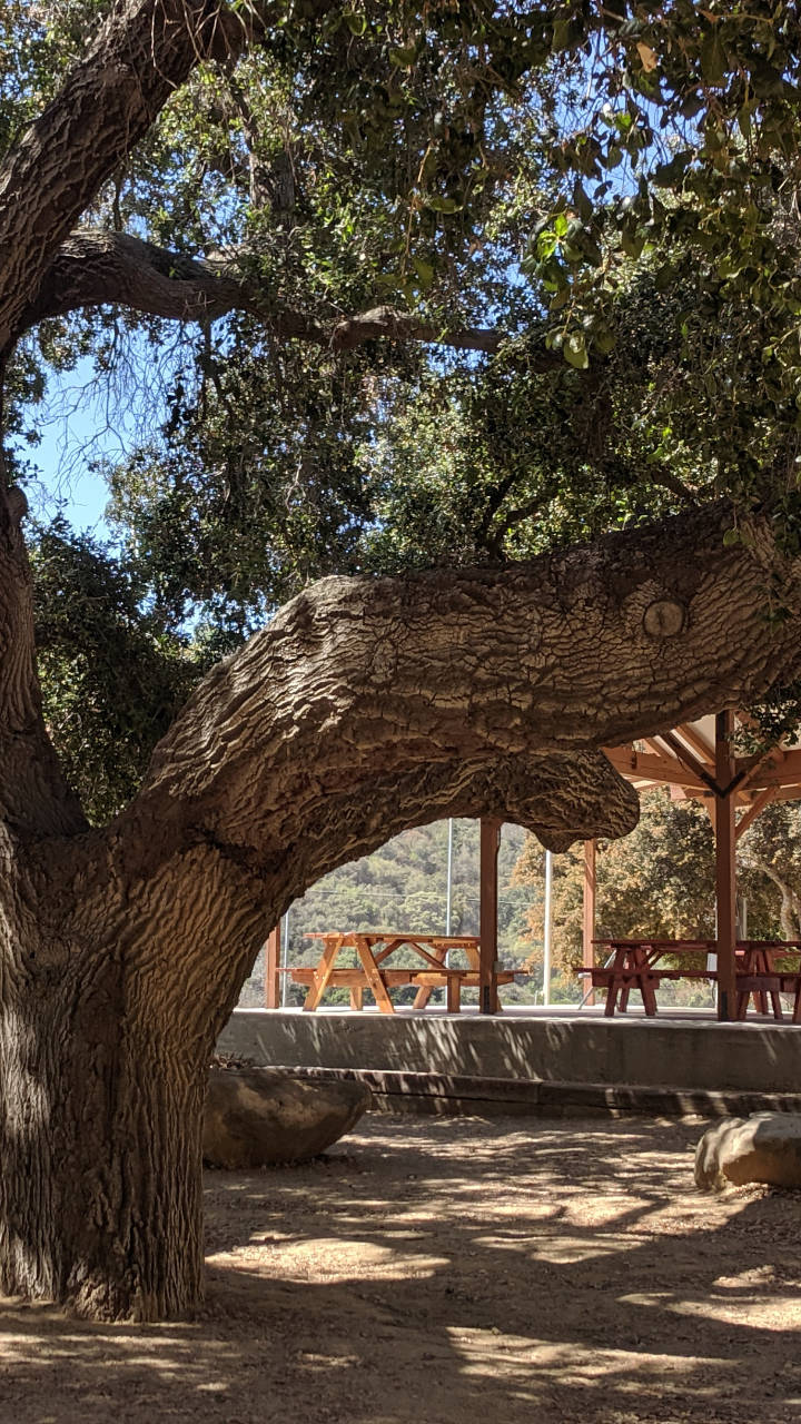TCC picnic area and stage under oak old tree