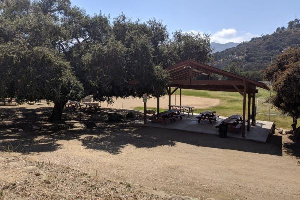 TCC picnic area under oak tree